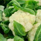 Ce legume si fructe sa nu ratezi in noiembrie