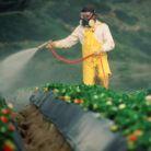 12 fructe si legume care sunt pline de pesticide