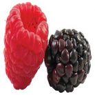 Mancati fructe inainte de masa daca vreti sa slabiti