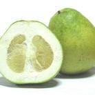 Pomelo, citrus daddy