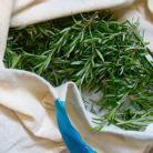 5 plante medicinale cu efect detoxifiant
