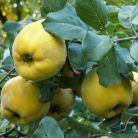 Nu rata fructele toamnei